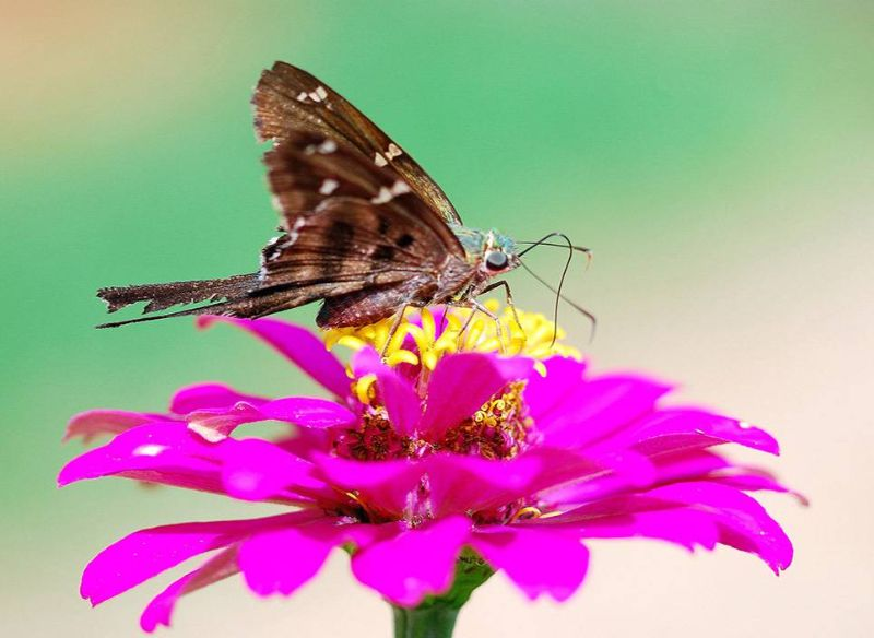 Nature Collection. Butterfly on Flower